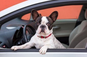 How to clean Interior: How to Remove Pet Stains from Car Upholstery