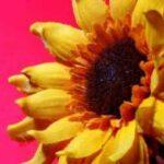 fake-sunflower