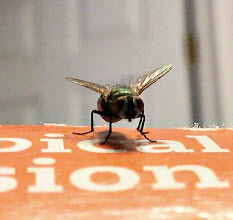 How to clean Kitchen & Bath: How to Remove Fly Spots from Surfaces
