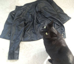 How to clean Furniture: How to Remove Pet Dander from Leather