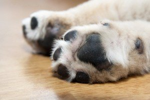 How to Clean Tar off a Dog's Paws