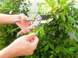 How to Remove Sticky Plant Residue from Your Hands