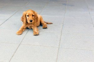 Puppy-On-Concrete
