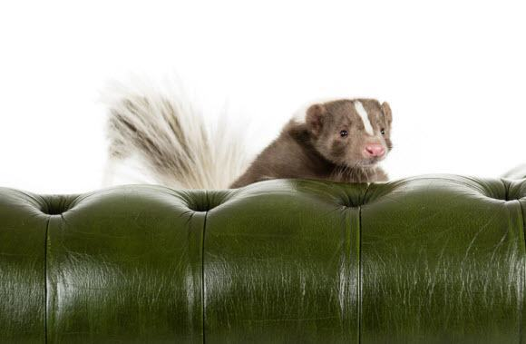 Skunk-On-Leather