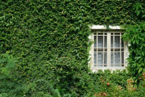 How to clean Exterior: Structural: How to Remove Plant Resin from Siding