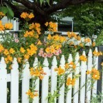 White Fence With Yellow Flowers