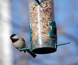 How to clean Outdoors: How to Clean a Plastic Bird Feeder