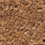 carpet5