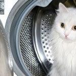 catinwashingmachine