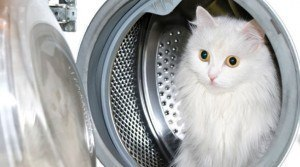 How to Clean Dingy Whites in a Front Load Washing Machine