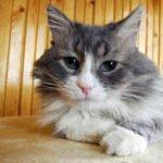 catpee
