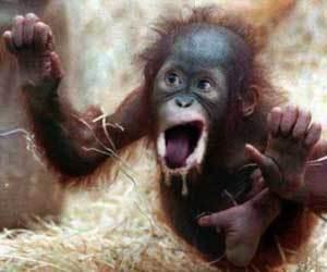 Spank the monkey liquid