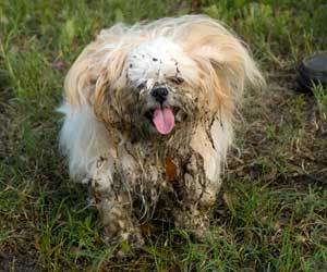 How to clean Dogs: How to Wash Dogs