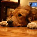 dogwoodfloor