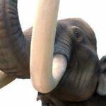 elephanttusks