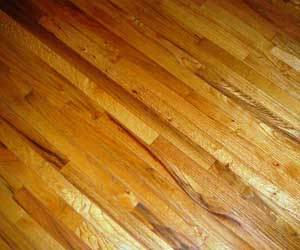 Remove Pet Urine From Hardwood Floors