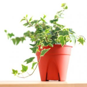 The Best Air-Cleaning Plants For Your Home