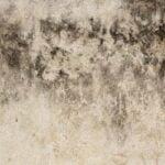 moldywallboard