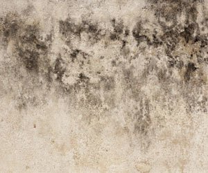 How To Remove Black Mold Mildew From