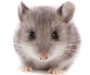 mouseincar