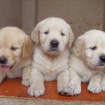 puppygrooming
