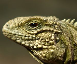 How To Clean And Disinfect Reptile Accessories 187 How To