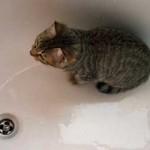 washingthecat