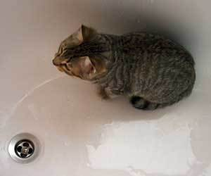 cat pee afterwards pooping linear unit sink