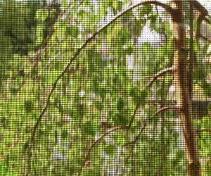 window-screen
